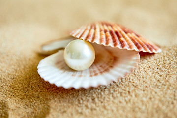 shell with a pearl