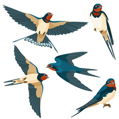 Swallows on white background / There are two sitting swallows and three flying swallows in cartoon style