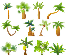 Tropic palm trees isolated. Exotic palm tree set vector illustration.