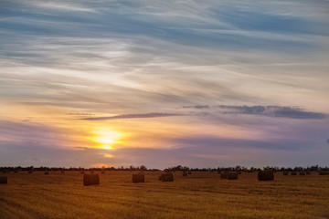 Sunset in the field