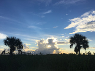 palm trees and a sunset in a field in Florida ater a storm