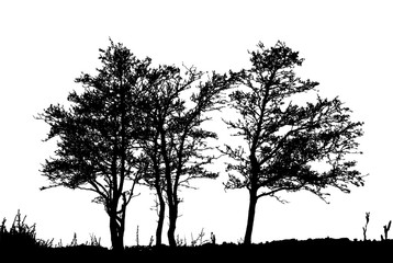 Realistic trees silhouette (vector illustration).ai10
