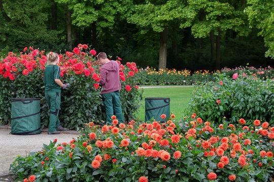 Großer Garten Dresden Dahliengarten Landschaftsgärtner bei der Arbeit