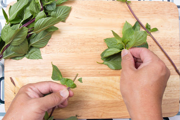 Chef shred Thai basil with hand