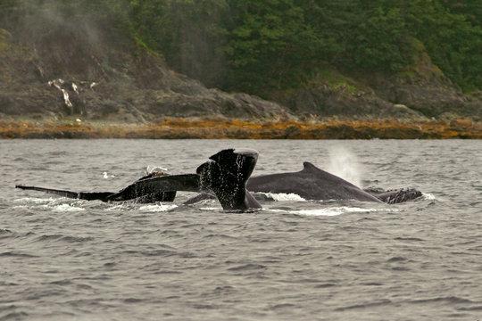 Whales, Alaska