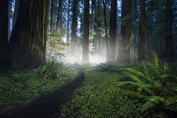 Scenic view of forest at Jedediah Smith Redwoods State Park