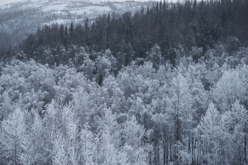 High angle view of snow covered trees