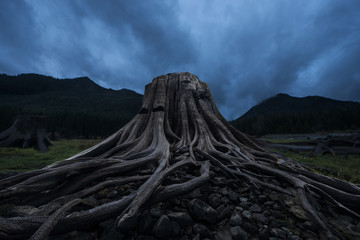 Low angle view of tree stump against stormy clouds at Keechelus Lake