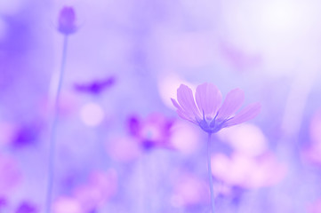 Delicate flowers in lilac shades on a beautiful background. Selective focus
