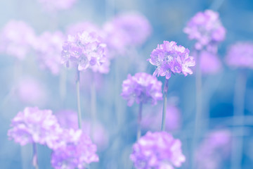 Small purple flowers on the turquoise background in the sunlight. Selective soft focus.