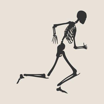 Human skeleton running. Vector illustration. Halloween party design template