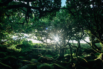 Morning Sunrays Hitting Mossy Old Trees and Rocks in Ancient Whistman's Wood (UK)