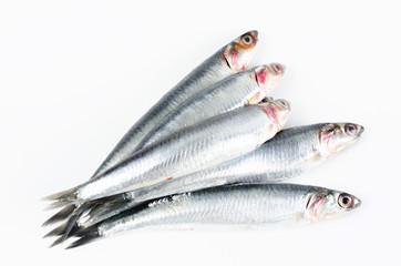 Foto auf Acrylglas Fisch Anchovies on white background.
