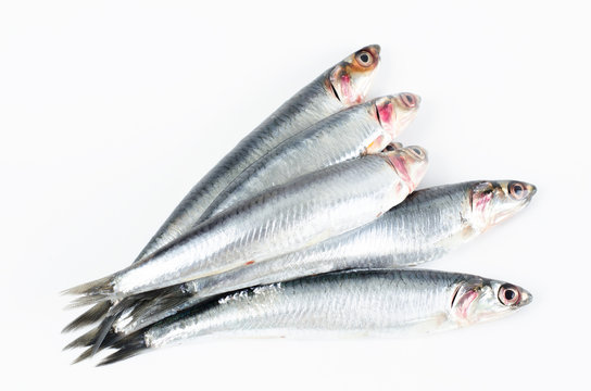 Anchovies on white background.