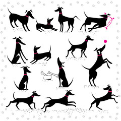 Italian greyhounds set of silhouettes
