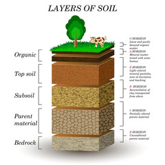 Layers of soil, education diagram. Mineral particles, sand, humus and stones, natural fertilizer. Template for banners, page, posters, vector illustration.