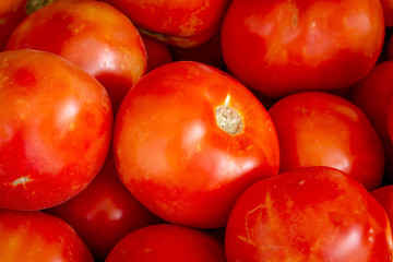 Fresh picked organic red tomatoes