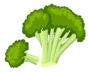 Bright vector collection of colorful broccoli. Fresh cartoon different vegetable isolated on white background used for magazine book poster card menu cover pages. Web site page and mobile app design