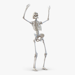 Human Female Skeleton on white. 3D illustration