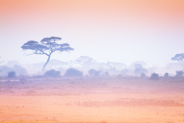 Sunset at African savannah with silhouetted trees