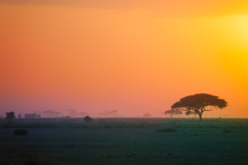 Beautiful scenery of African savannah at sunset