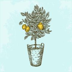 Lemon tree in basket. Vintage style. Vector illustration