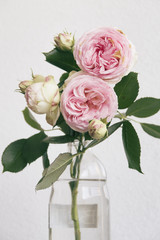 pink roses in a jar on white background