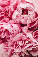 background of large pink peonies in a garden