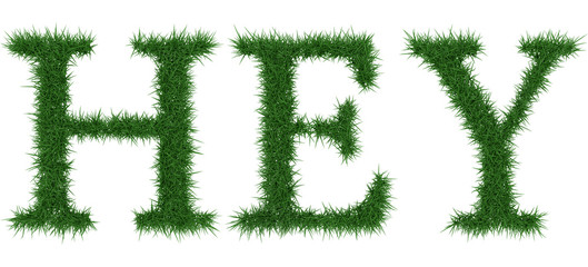 Hey - 3D rendering fresh Grass letters isolated on whhite background.