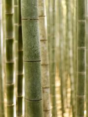 Arashiyama Bamboo Forest Grove