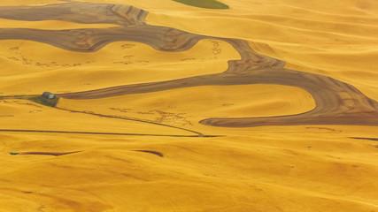 wheat field in Palouse, WA