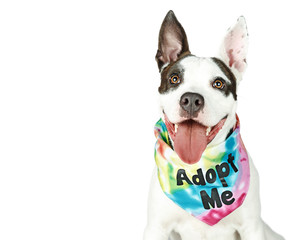 Happy Dog Wearing Adopt Me Bandana