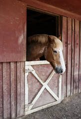 Horse In Red Barn