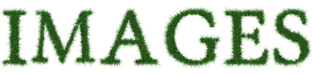 Images - 3D rendering fresh Grass letters isolated on whhite background.