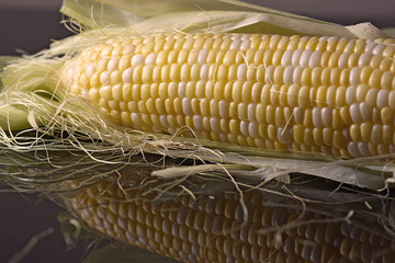 Artistic Corn on the cob kernel close up shot on a reflective surface