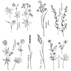 vector ink drawing plants