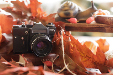 retro camera in the fall with bright red leaves on a wooden table. still life in retro style.