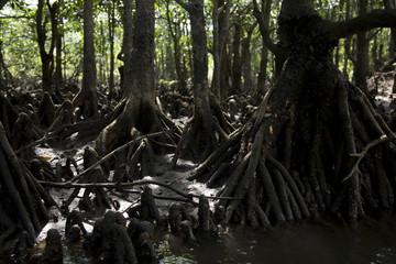 西表島原生林