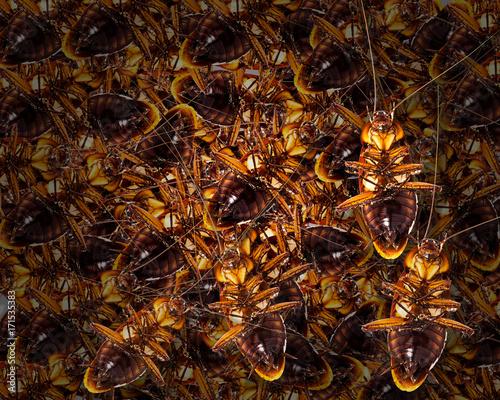 Roach Nest