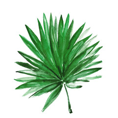 Watercolor tropical leaf isolated on white