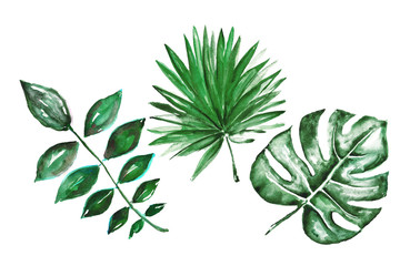 Different watercolor tropical leaves isolated on white