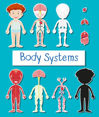 Little boy and body system poster