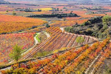 Vineyard in Autumn, La Rioja, Spain
