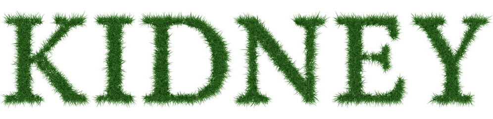 Kidney - 3D rendering fresh Grass letters isolated on whhite background.