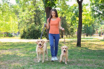 Young woman walking with yellow retrievers in park