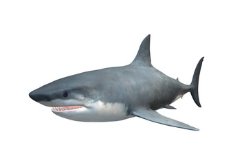 3D Rendering Megalodon Shark on White