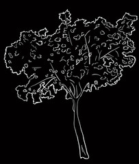single tree white sketch on black background