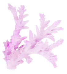 lilac isolated old coral branch