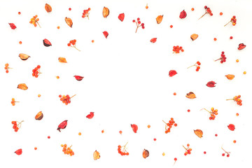 Autumn frame. Viburnum berries, dried branches, autumn acorn, flowers on white background. Flat lay, top view