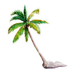 Watercolor illustration, hand drawn palm-tree isolated object on white background.